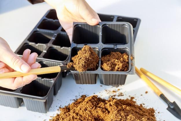 농부들은 종자 식물을 땅에 파종하고 있습니다. 종자 파종을위한 묘목 양육 트레이. 검은 플라스틱 냄비에 이탄에 뿌린 씨앗