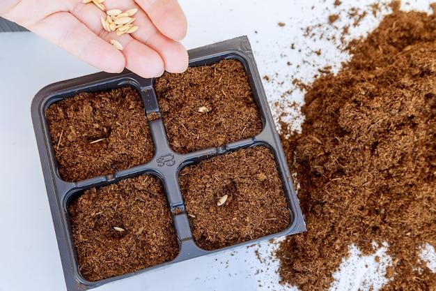 농부들은 종자 식물을 땅에 파종하고 있습니다. 종자 파종을위한 묘목 양육 트레이.