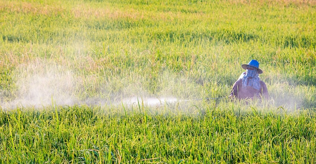 Farmers are spraying crops in a green field.