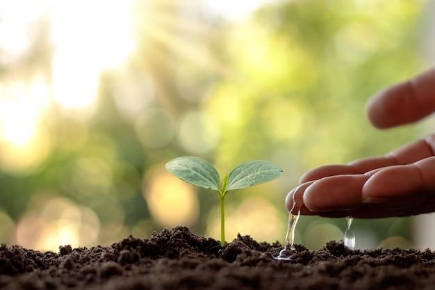 농부들은 세계 환경의 날이라는 개념으로 작은 식물에 손으로 물을주고 있습니다.
