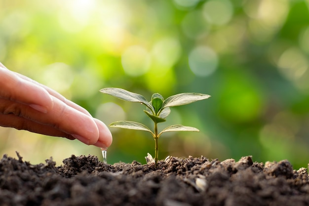 농부들은 세계 환경의 날을 기념하여 작은 식물에 손으로 물을 주고 있습니다.