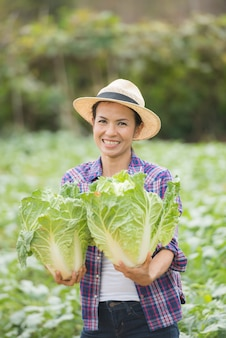 Farmers are working in chinese cabbage farm