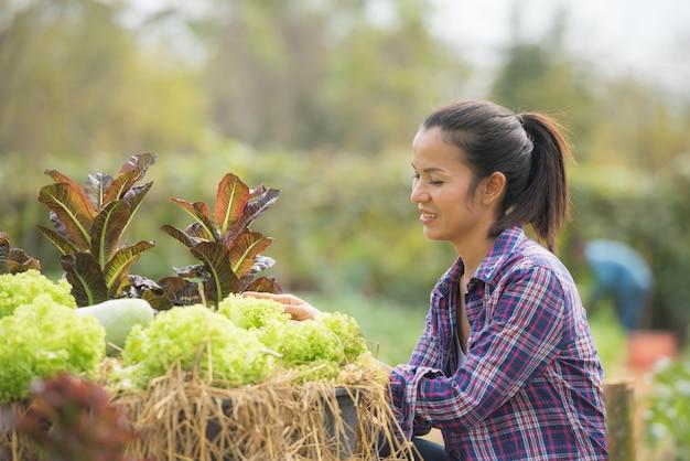 녹색 오크 상추 농장에서 일하는 농부들