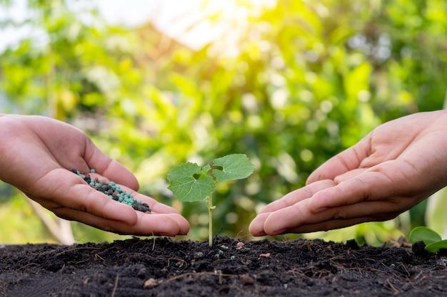농부들의 손은 묘목을 비옥하게하고 비옥 한 토양에서 자라는 묘목에 물을주고 있습니다.