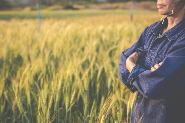 農家は大麦を楽しく収穫します。