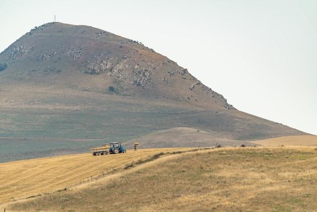 Фермеры собирают сено в поле
