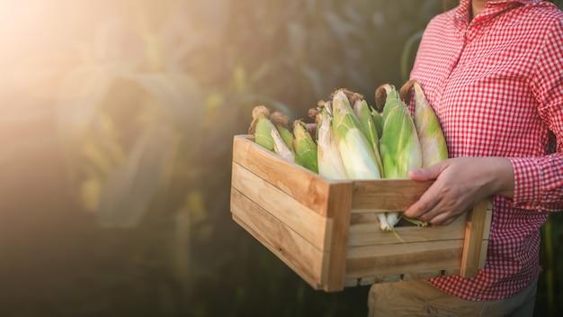 農民は有機トウモロコシでいっぱいの箱を持っています。背景はとうもろこし畑です。