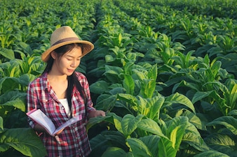 Farmers hold notebook check modern tobacco fields.