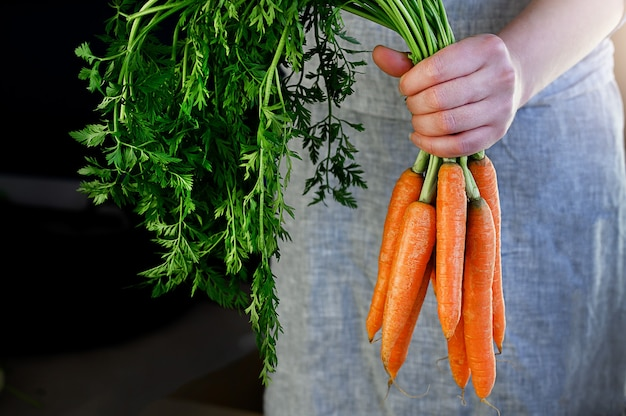 Фермеры держат свежую морковь. женщина руки, держа свежий урожай связки. здоровые органические продукты питания, овощи, сельское хозяйство, крупным планом. фото высокого качества