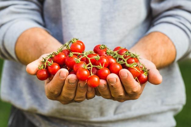 신선한 토마토를 들고 농부. 건강한 유기농 식품