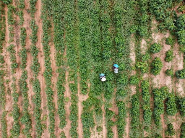 農家は有毒な農薬を農地に散布します。