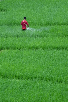 彼のフィールドに昆虫を散布する農家