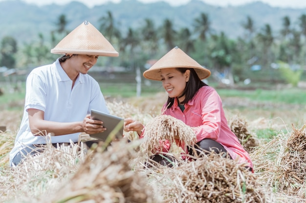 Farmers wearing caping sit in the fields using tablets after harvest with good results