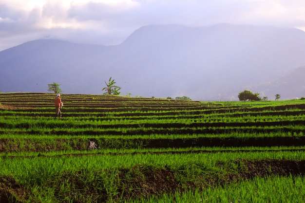 Farmers work in the mornings in rice fields and blue mountains