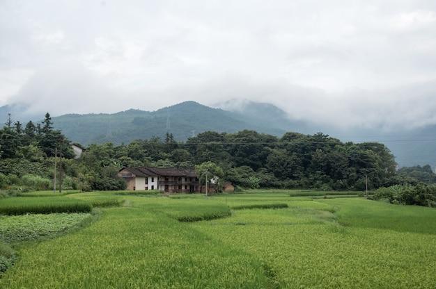 田んぼと緑米の真ん中にある農家