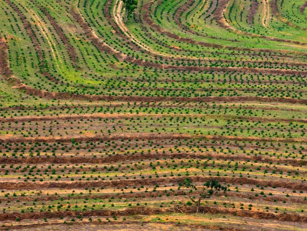 Farming field - aerial view