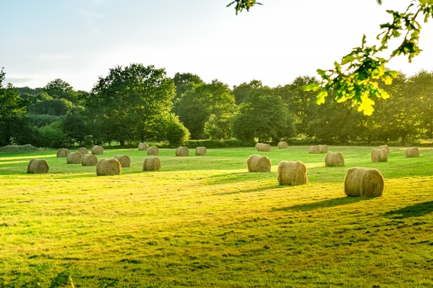 Farmland meadow with straw bale at sunset. brittany, france