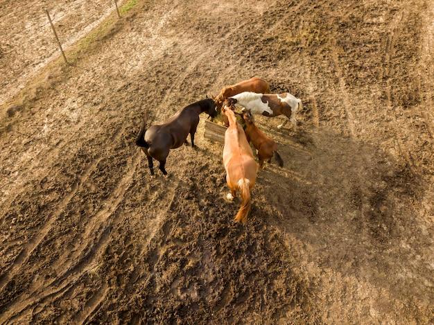 Приусадебный участок с небольшой группой лошадей, пасущихся в летний день. вид с воздуха с дрона