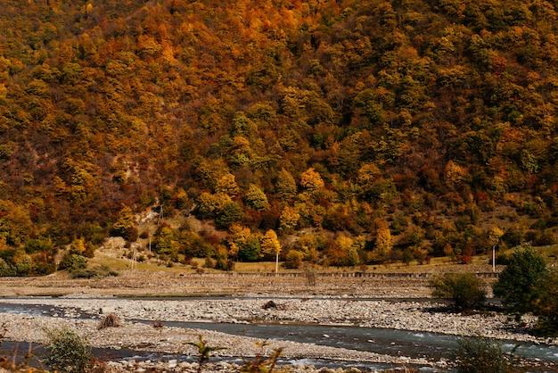 魅力的な自然、明るいオレンジの木に覆われた山の斜面、秋の自然