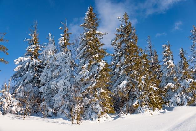 맑은 서리가 내린 겨울 날 눈 덮인 슬로프에 위치한 겨울 숲의 매혹적인 맑은 풍경. 스키장에서의 휴가의 끝