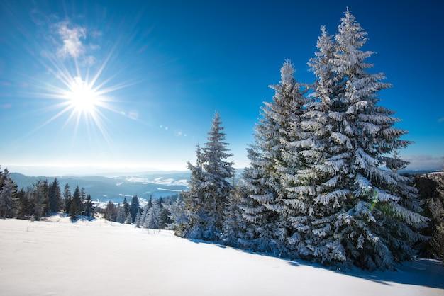 맑은 서리가 내린 겨울 날 눈 덮인 슬로프에 위치한 겨울 숲의 매혹적인 맑은 풍경
