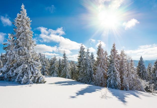 冬の森の魅力的な日当たりの良い風景