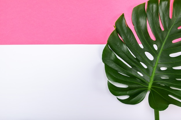 Fashion background with monstera leaf and copyspace