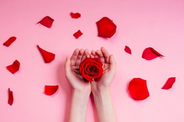 ファッションハンドナチュラルコスメティックス女性、レッドローズ美しいカモミールの花の葉ととげハンドハンドケア。バレンタインデーの腕の女の子のスタジオはピンクの背景を撮影しました