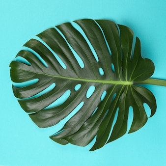 Fashion  with monstera leaf