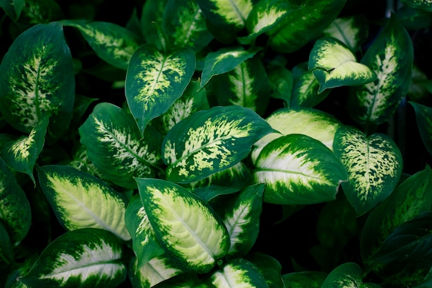 유행 이국적인 식물, 평면도. 실내 식물, 녹지.