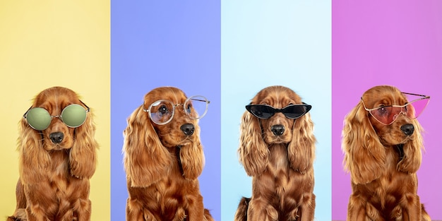 Модные очки стильные очаровательные собаки позируют милые собачки или домашние животные счастливы