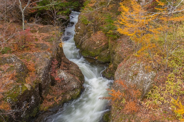 Fast flowing stream water in autumn forest, amazing colorful scenery landscape.