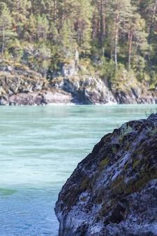 Быстрая широкая и полноводная горная река. берег виден на фоне красивого леса. большая горная река катунь, бирюзового цвета, в горном алтае, республика алтай