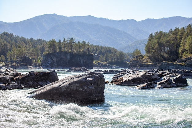 A fast-flowing wide and full-flowing mountain river. large rocks stick out of the water. big mountain river katun, turquoise color, in the altai mountains, altai republic.