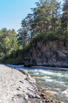 Fast-flowing wide and full-flowing mountain river. the shore is visible against the background of a beautiful forest. big mountain river katun, turquoise color, in the altai mountains, altai republi
