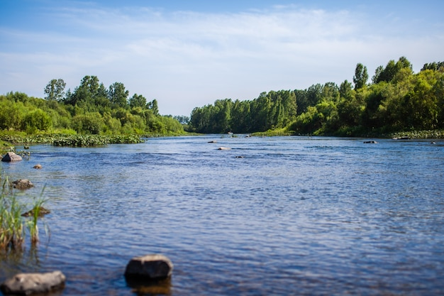 Fast-flowing wide and full-flowing mountain river. the shore is visible against the background of a beautiful forest. big mountain river