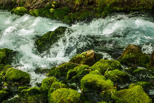 Fast mountain stream in forests of montenegro