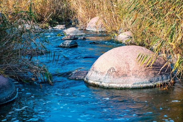 A fast, shallow, clean stream runs among smooth wet large stones surrounded by tall dry lumps that are swaying in the wind in picturesque ukraine