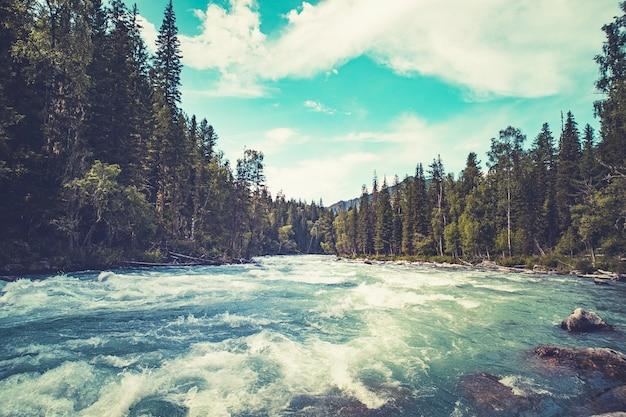 Быстрый поток воды в горной реке с хвойным лесом, республика алтай, сибирь, россия. прекрасный пейзаж. дикая природа тайги. бурное течение бурной реки.