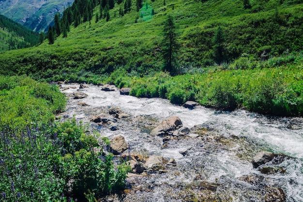 Быстрый водный поток горного ручья среди валунов при ярком солнечном свете в долине. Premium Фотографии