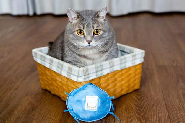 太った英国の猫は、保護マスクの横にある籐のバスケットに座っています。隔離と検疫。