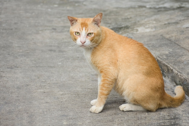 Fat brown cats sitting on the pavement.