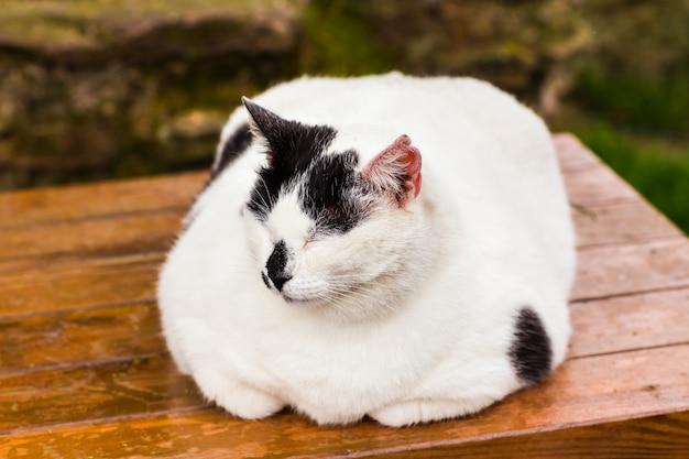 뚱뚱한 고양이 앉아
