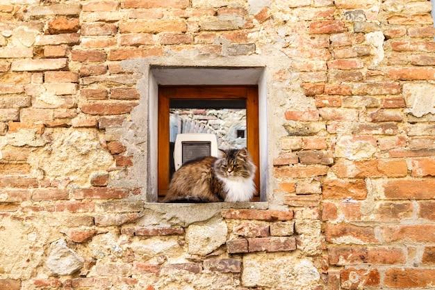 고대 석조 집 이탈리아의 창가에 앉아 있는 뚱뚱한 솜털 고양이