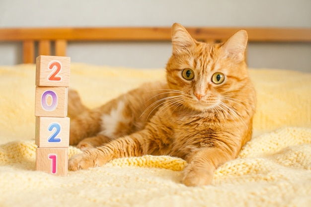 A fat ginger cat and the numbers 2021 from children's cubes on a yellow knitted blanket. new year