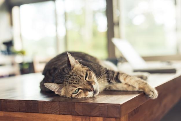 Толстая полосатая домашняя кошка спит на столе дома