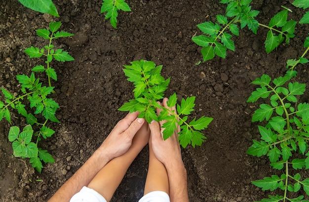 父と子は庭に植物を植えています
