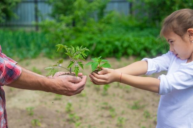 父と娘が庭に苗を植えています