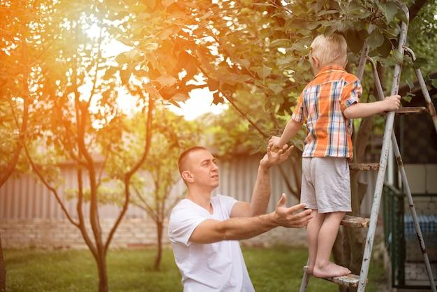 父と幼い息子はリンゴを収穫しています。