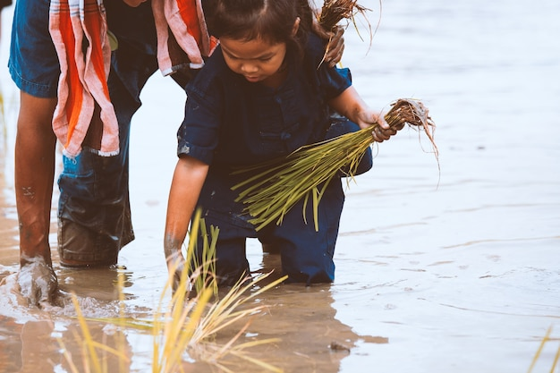 Father farmer teaching his child planting rice in the rice field with fun and happiness